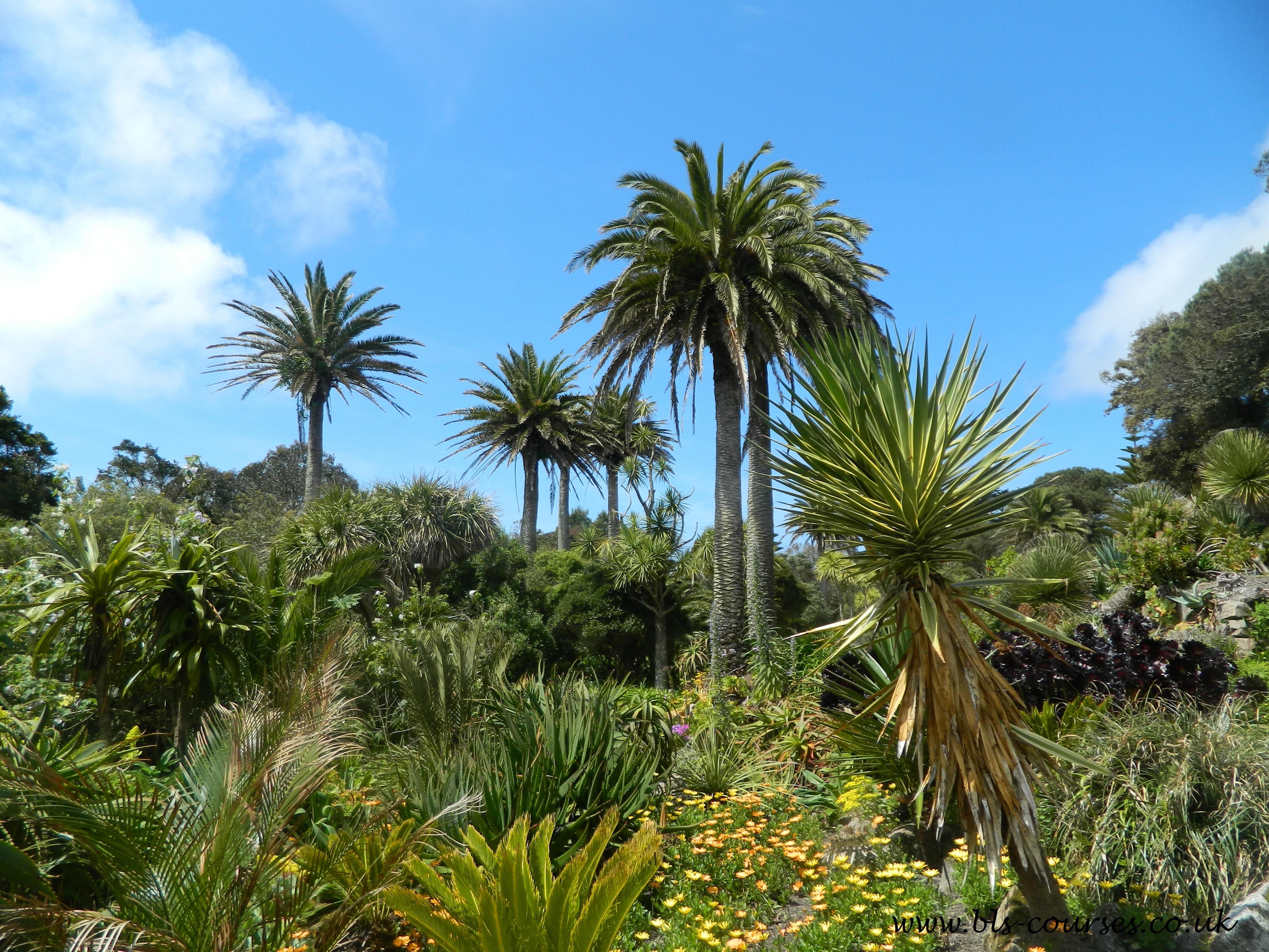 Scilly Gardens