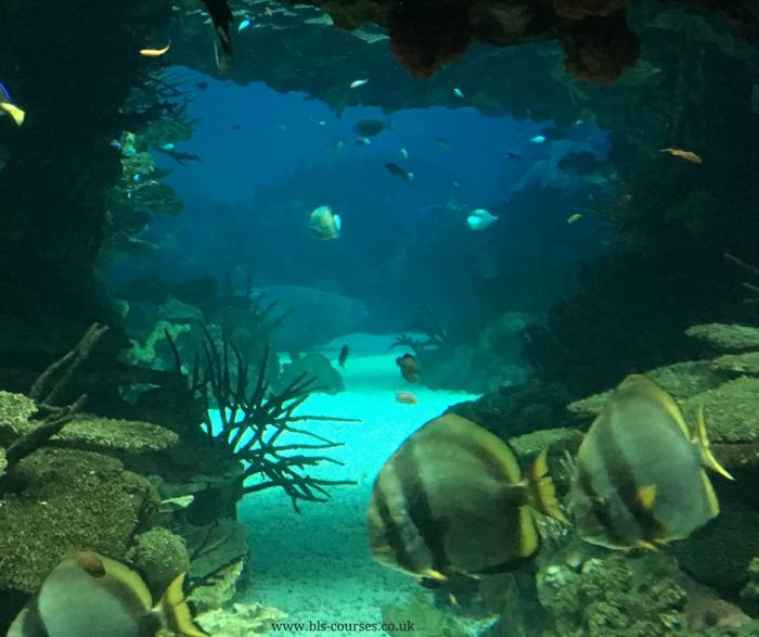a aquarium 1